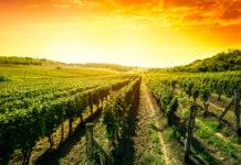 Weinjahrgang 2016